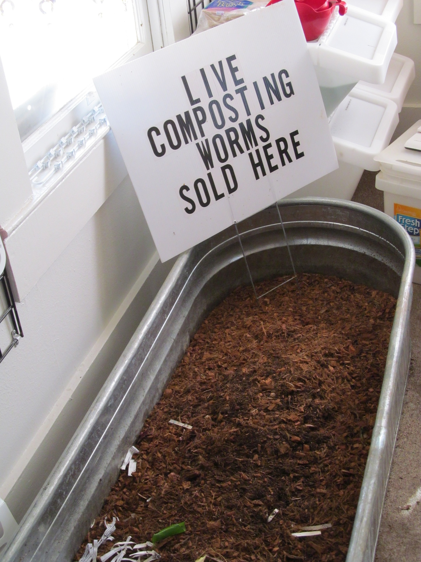 Live Composting Worms